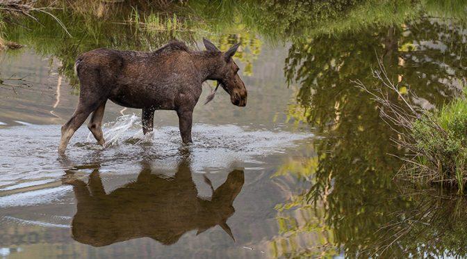 Finding Wildlife