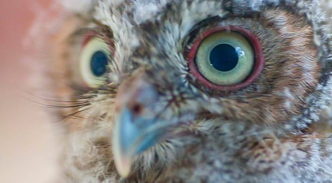 What Do You See? – The Wisdom of an Owl